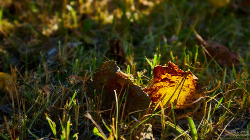 Янтарный цвет осени