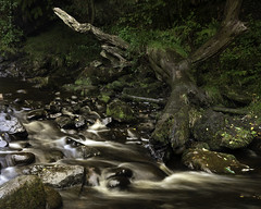 river Wharfe (richgparkes) Tags: yourkshire dales bolton abbey