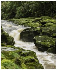 river Wharfe rapids (richgparkes) Tags: yourkshire dales bolton abbey