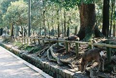 (Kkeina) Tags: film analog manual 35mm 50mm olympus om om1 japan nature nara trees