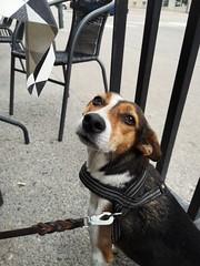 Meja (Explored) (skumroffe) Tags: meja dog hund perro chien selmaskrog selmas sundbyberg stockholm sweden explore explored