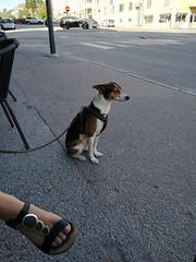 Meja (Explored) (skumroffe) Tags: meja dog hund perro chien sundbyberg stockholm sweden selmaskrog selmas fot foot explore explored