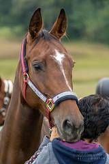 A7305599_s (AndiP66) Tags: kva pferdesporttage mettmenstetten kavallerieverein bezirk affoltern reitanlage grüthau 14september2019 september 2019 springen pferd horse schweiz switzerland kantonzürich cantonzurich concours wettbewerb horsejumping equestrian sports springreiten pferdespringen pferdesport sport sony sonyalpha 7markiii 7iii 7m3 a7iii alpha ilce7m3 sonyfe70300mmf4556goss fe70300mm 70300mm f4556 emount andreaspeters