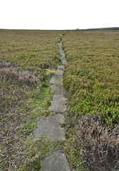 WoW, great now that's what i call a causeway (petefreeman75) Tags: georgegapcauseway trod path pannierway nikond90 northyorkshire northyorkmoors northyorkmoorsnationalpark moors heather
