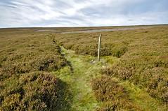 _DSC6431 (petefreeman75) Tags: georgegapcauseway trod fryup rosedale nikond90 nikon d90 sigma1020mm causeway pannierway path moors heather northyorkshire northyorkmoors northyorkmoorsnationalpark