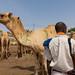 Somali policeman in the camel market, Woqooyi Galbeed region, Hargeisa, Somaliland