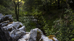 Hope (Maisam Ladha) Tags: life trees love nature landscape lost hope waterfall rocks stream peace natural quotation abstract photography quote regret