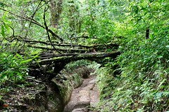 Costa Rica (joeksuey) Tags: costarica joeksuey insect hangingbridges monteverde santaelena threadlegged assassinbug tree trail trailview cloudforest aventura