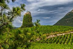 La Tour dans sa robe végétale (Savoie 08/2019) (gerardcarron) Tags: campagne canoneos80d chignin ciel cloud eté landscape paysage savoie summer vigne