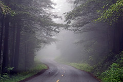 Redwoods National and State Parks, CA (SomePhotosTakenByMe) Tags: ontheroad fog nebel baum tree california usa america amerika unitedstates outdoor redwoodnationalpark nationalpark redwood explored inexplore flickrexplore