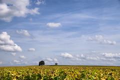 Nuages (Croc'odile67) Tags: nikon d3300 sigma 18200dcoshsmc paysage landscape nature nuage ciel cloud sky arbres trees
