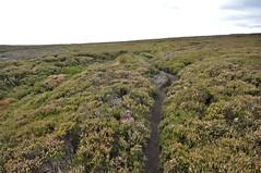 _DSC6447 (petefreeman75) Tags: georgegapcauseway trod fryup rosedale nikond90 nikon d90 sigma1020mm causeway pannierway path moors heather northyorkshire northyorkmoors northyorkmoorsnationalpark