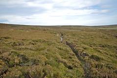 _DSC6446 (petefreeman75) Tags: georgegapcauseway trod fryup rosedale nikond90 nikon d90 sigma1020mm causeway pannierway path moors heather northyorkshire northyorkmoors northyorkmoorsnationalpark