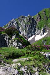 La montagne et ses fleurs (N.Hell) Tags: mountain alps flower plant nature landscape view scenery beautiful earth hiking biodiversity environment canon 50d sigma 70200mm somptuous magnificient impressive rock