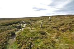 _DSC6440 (petefreeman75) Tags: georgegapcauseway trod fryup rosedale nikond90 nikon d90 sigma1020mm causeway pannierway path moors heather northyorkshire northyorkmoors northyorkmoorsnationalpark