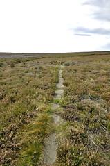_DSC6438 (petefreeman75) Tags: georgegapcauseway trod fryup rosedale nikond90 nikon d90 sigma1020mm causeway pannierway path moors heather northyorkshire northyorkmoors northyorkmoorsnationalpark