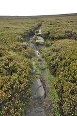 _DSC6436 (petefreeman75) Tags: georgegapcauseway trod fryup rosedale nikond90 nikon d90 sigma1020mm causeway pannierway path moors heather northyorkshire northyorkmoors northyorkmoorsnationalpark