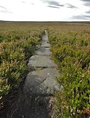 _DSC6435 (petefreeman75) Tags: georgegapcauseway trod fryup rosedale nikond90 nikon d90 sigma1020mm causeway pannierway path moors heather northyorkshire northyorkmoors northyorkmoorsnationalpark