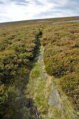 _DSC6433 (petefreeman75) Tags: georgegapcauseway trod fryup rosedale nikond90 nikon d90 sigma1020mm causeway pannierway path moors heather northyorkshire northyorkmoors northyorkmoorsnationalpark