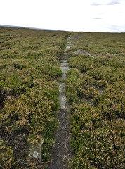 _DSC6449 (petefreeman75) Tags: georgegapcauseway trod fryup rosedale nikond90 nikon d90 sigma1020mm causeway pannierway path moors heather northyorkshire northyorkmoors northyorkmoorsnationalpark