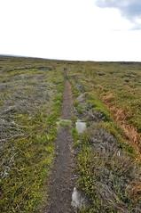 _DSC6448 (petefreeman75) Tags: georgegapcauseway trod fryup rosedale nikond90 nikon d90 sigma1020mm causeway pannierway path moors heather northyorkshire northyorkmoors northyorkmoorsnationalpark