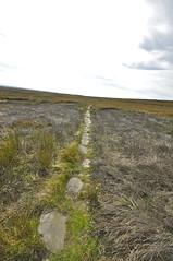 _DSC6444 (petefreeman75) Tags: georgegapcauseway trod fryup rosedale nikond90 nikon d90 sigma1020mm causeway pannierway path moors heather northyorkshire northyorkmoors northyorkmoorsnationalpark