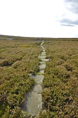 _DSC6439 (petefreeman75) Tags: georgegapcauseway trod fryup rosedale nikond90 nikon d90 sigma1020mm causeway pannierway path moors heather northyorkshire northyorkmoors northyorkmoorsnationalpark