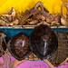Turtles shells and sharks jaws in a fisherman shop, Sahil region, Berbera, Somaliland