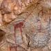 Cave paintings and petroglyphs depicting giraffes, Woqooyi Galbeed, Laas Geel, Somaliland