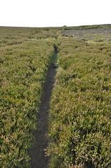 _DSC6429 (petefreeman75) Tags: georgegapcauseway trod fryup rosedale nikond90 nikon d90 sigma1020mm causeway pannierway path moors heather northyorkshire northyorkmoors northyorkmoorsnationalpark
