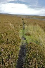 _DSC6428 (petefreeman75) Tags: georgegapcauseway trod fryup rosedale nikond90 nikon d90 sigma1020mm causeway pannierway path moors heather northyorkshire northyorkmoors northyorkmoorsnationalpark