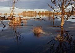 Luz de tormenta ⛈ (pascual 53) Tags: canon árboles laguna calma reflejos navarra 1635mm 5ds matojos ablitas luzdetormenta⛈ lee lucroit lluvia