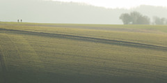Morning walks (Jean-Luc Peluchon) Tags: fz1000 champ field charente nouvelleaquitaine france people randonnée lumière light sunset sunrise brouillard fog haze brume mist rural campaign campagne nature