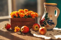 Marigold and apples (kinmegami) Tags: miniatureflowers miniature polymerclay dollhouseminiature handmade