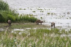 Wildschweine (naturgucker.de) Tags: ngid983071696 susscrofa wildschwein