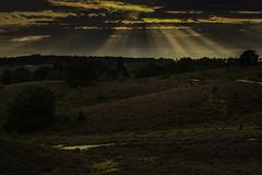 850_1049 (Wolfgang von Vietinghoff) Tags: posbank sunset heide rheden heather nikond850