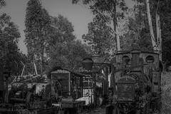 Where would you start- (ruthtomlinson) Tags: train deserted locomotive rust abandoned rail relic transportation transport brisbane