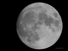 Harvest Moon (Anton Shomali - Thank you for over 3 million views) Tags: moon full fullmoon harvestmoon fullmoonseptember2019 september 2019 night sky nightsky closeup dark fridaythe13th microharvestmoon micro fullmoonphase phase moonphases rare lunar beautiful photography photo earth space beautifulcapture