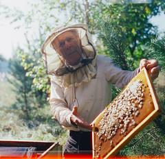 Granddad at work (trom.pom) Tags: 120film mediumformat kiev88 cinestill800t beekeper portrait ukraine