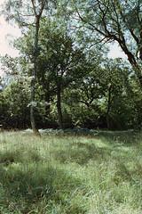 _IMG5039 (fleetingphotons) Tags: pentaxmzs sigma35mmf14art cinestill50d cinestillc41kit selfdeveloped film 35mm c41 westonbirtarboretum trees leaves camerascan