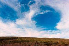 _IMG5102 (fleetingphotons) Tags: pentaxmzs sigma35mmf14art film 35mm c41 kodakportra160 selfdeveloped cinestillc41kit camerascan westonbirtarboretum fromthecar blue sky clouds