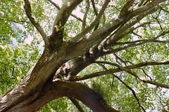 _IMG5099 (fleetingphotons) Tags: pentaxmzs sigma35mmf14art film 35mm c41 kodakportra160 selfdeveloped cinestillc41kit camerascan westonbirtarboretum trees leaves