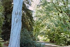 _IMG5095 (fleetingphotons) Tags: pentaxmzs sigma35mmf14art film 35mm c41 kodakportra160 selfdeveloped cinestillc41kit camerascan westonbirtarboretum trees leaves