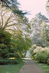 _IMG5093 (fleetingphotons) Tags: pentaxmzs sigma35mmf14art film 35mm c41 kodakportra160 selfdeveloped cinestillc41kit camerascan westonbirtarboretum trees leaves