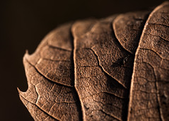 old (stachelpferdchen) Tags: nature macro light exterior brown shadows monochrome dark decay plants black