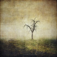 all that is left (Dyrk.Wyst) Tags: germany atmosphere fog minimalism landscape mood nature copyspace conceptual grass fall desolation sadness birds silhouettes textures baretree photoillustration misty moody photomanipulation