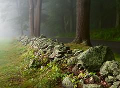 Wet (Chancy Rendezvous) Tags: wet texture textured rocks trees damp morning rain fog mist massachusetts newengland lichen nikon nikkor d800e nikond800e stones stonewall wall