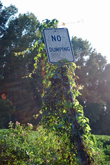 No Dumping Sign. (dccradio) Tags: lumberton nc northcarolina robesoncounty outdoor outdoors outside nikon d40 dslr weekend saturday evening saturdayevening goodevening nature natural sky bluesky eveningsky tree trees branch branches treebranch treebranches treelimb treelimbs sign words text nodumping foliage leaf leaves greenery