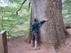 Arbre remarquable Forêt de Tronçais