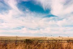_IMG5104 (fleetingphotons) Tags: pentaxmzs sigma35mmf14art film 35mm c41 kodakportra160 selfdeveloped cinestillc41kit camerascan westonbirtarboretum fromthecar blue sky clouds